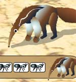 The Anteater Game